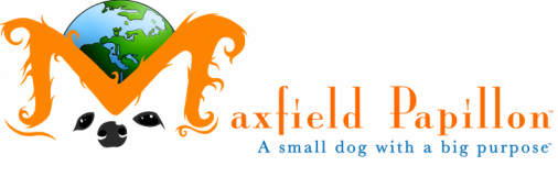 Maxfield Papillon - a small dog with a big purpose